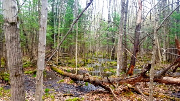 Wetlands mingle with woodlands